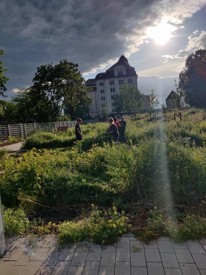 Essbares öffentliches Stadtgrün eröffnen Gartenflächen am Alberthafen